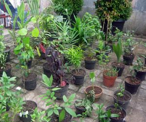Tag/tanaman Hias
